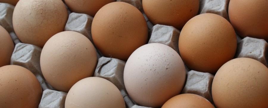 Ägg proteinkälla