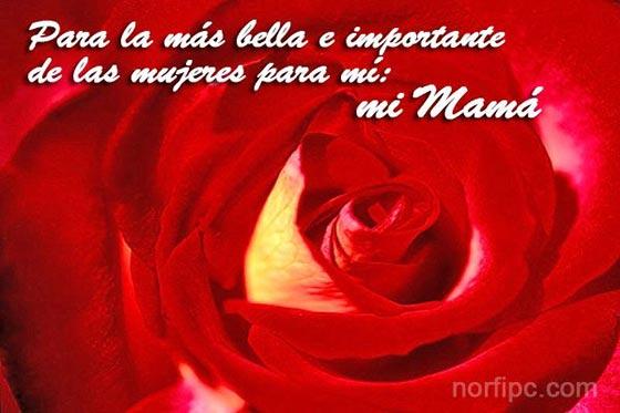 Postal con una rosa roja para Mamá en el dia de las madres