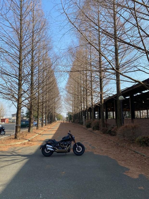 野木ホフマン館前のメタセコイア並木