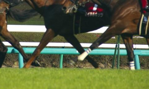 レース中の馬