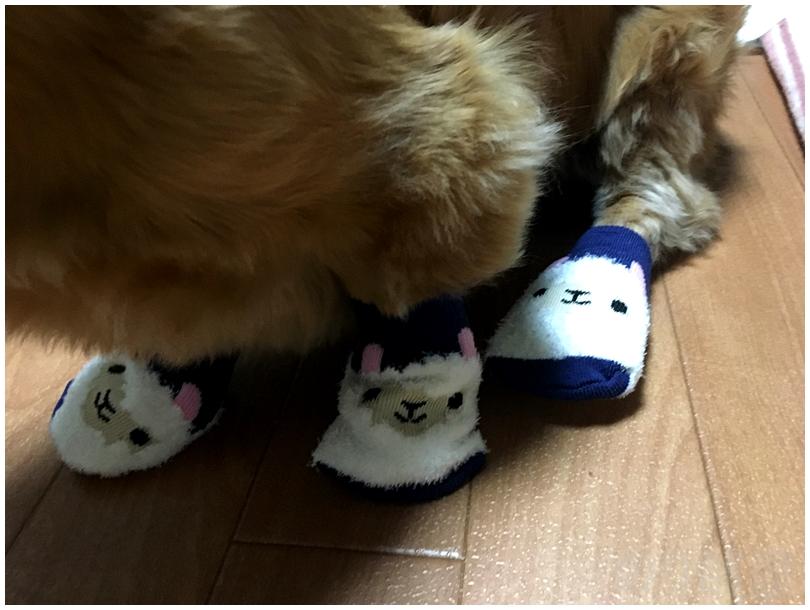イス脚カバーを靴下代わりにする。肉球が剥がれて血が出た時の対処法。犬の足の裏を守り舐めるのや病気を防ぎ散歩もさせて元気で長生き。