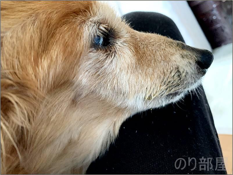 犬の歯周病を放置して手術をして抜糸してから1ヶ月後。何もなかったかのように回復しました!【2019年 3月 14日】【実体験】犬の歯周病を放置して「ほっぺに穴」が空いた!手術をし治療しました。 歯磨きで予防や簡単なケアのオススメ方法!