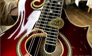 トゥクトゥクスキップのフラットマンドリン弾きのよねっちさん愛用ピック フラットマンドリンに人気のオススメのピック! ブルーグラス、アイリッシュ、ジャズに人気の厚くて弾きやすいピック。