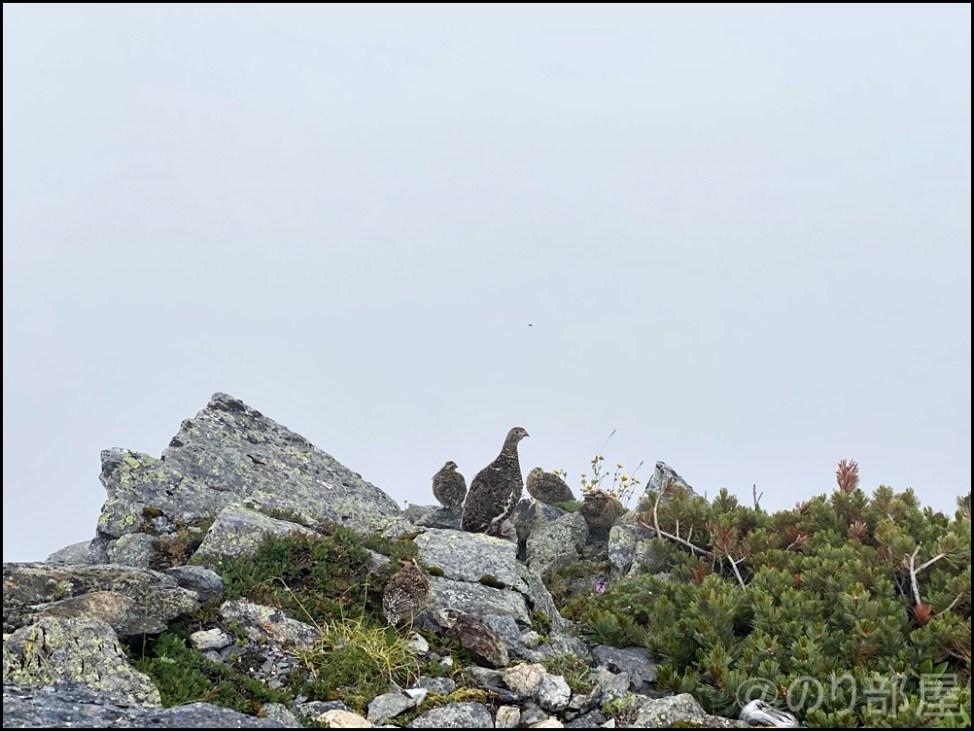 北岳下山。途中でライチョウ(雷鳥)の親子にも出会えました! 北岳に初心者が登ってきました!富士山よりも難易度が高くて危険な場所も!