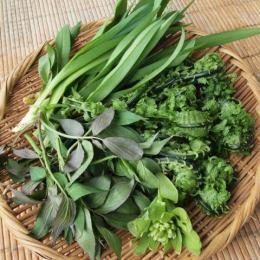 温泉民宿唐松荘の採れたて山菜