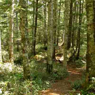 原生林の森