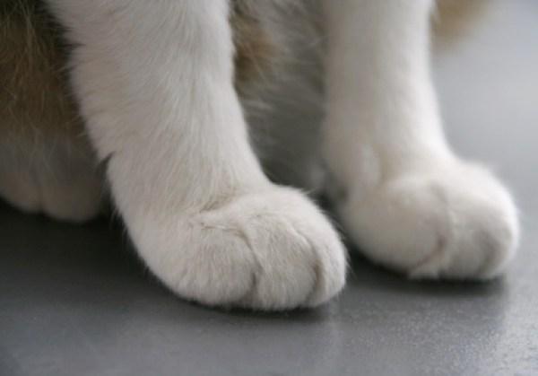 ネコの手を借りたい