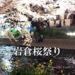 岩倉桜祭り 五条川