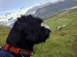 Reisen mit Kind und Hund in den Bergen der Lofoten