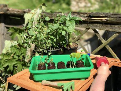 Gärtnern mit Kindern im Hochbeet - Perfekte Vorbereitung mit dem Minigewächshaus