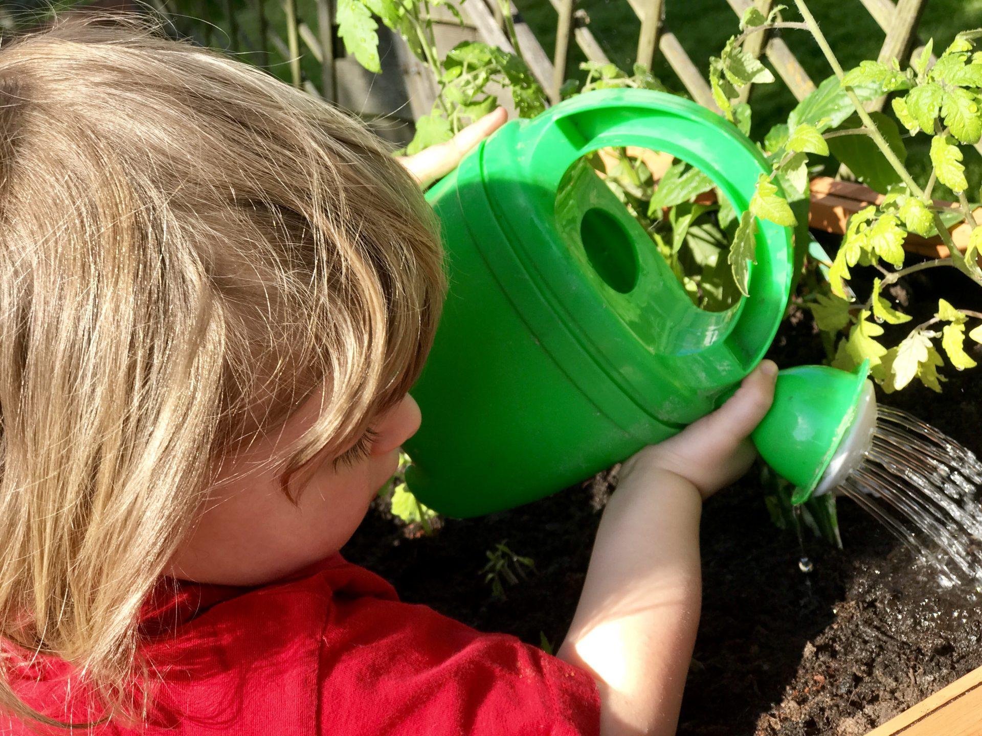 Hochbeet für Kinder – Merlin giesst seine Setzlinge