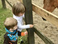 Merlin und Milan füttern ein Pony