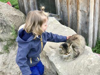 Zahme Katzen kann man streicheln im Baumhaushotel