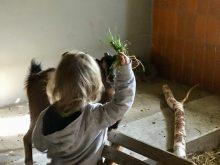 Gras für die Ziegen im Baumhaushotel