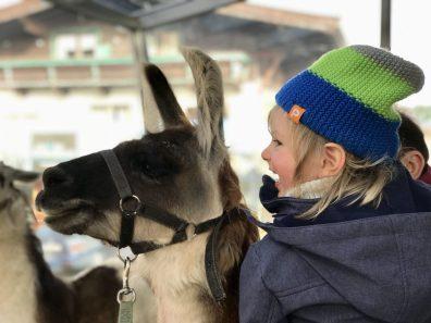 Merlin hat keine Berührungsängste mit den Lamas