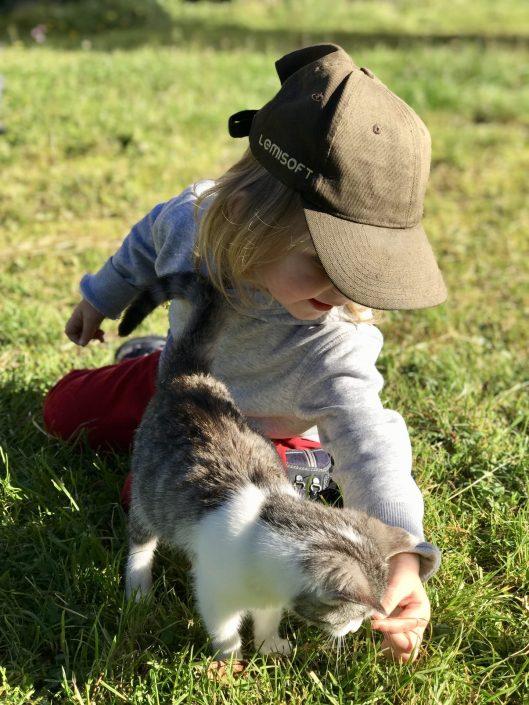 Auch die Märchen der Gebrüder Grimm wurden von Katzen inspiriert