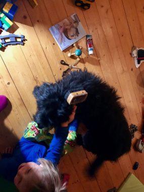 Risky Week 09 – Merlin striegelt Hund Wilma