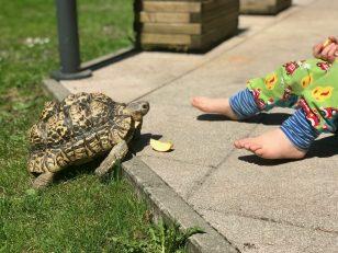 Schildkröte Franz und Merlin