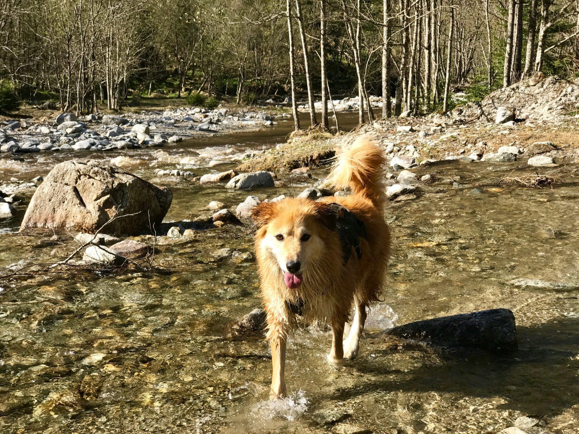Risky Week 16 – Hund Whiskey im Fluss