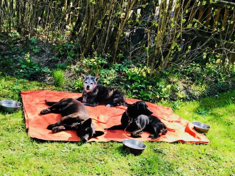 Hundehotel – drei Hunde liegen auf einer Decke
