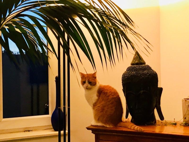 Risky Week 18 – Katze vor dem Fenster