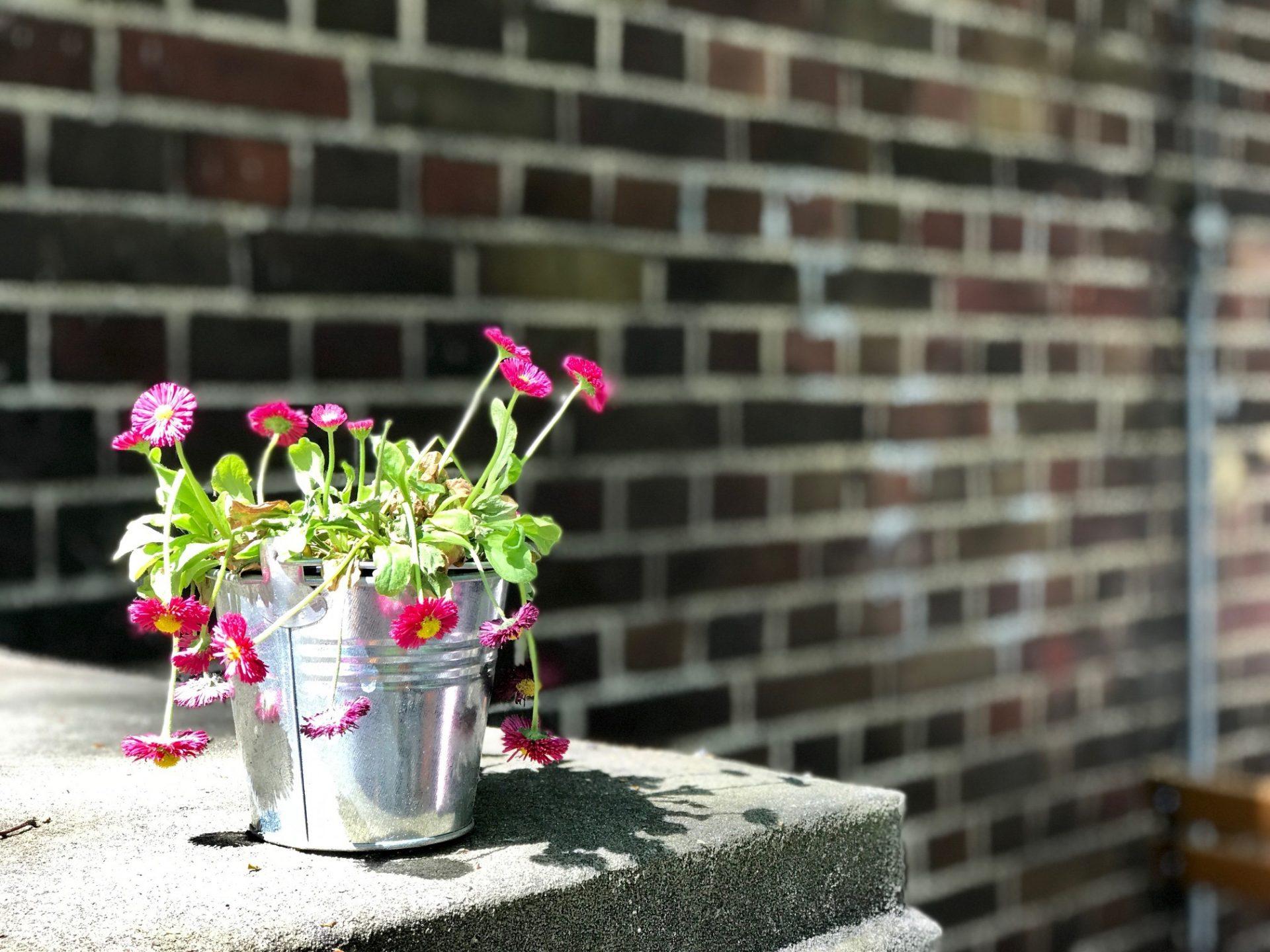 DSGVO – da hängen auch mal die (Blumen-) Köpfe