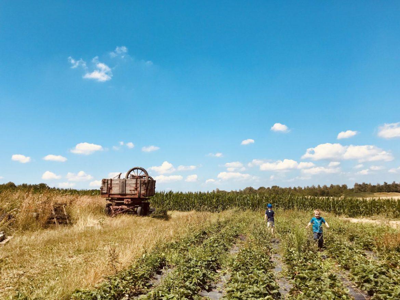 Klimaschutz-Jungen_auf_Biobauernhof