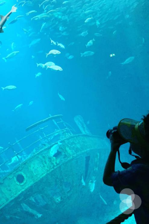 Rückblick – Merlin fotografiert im Ozeaneum den Hai