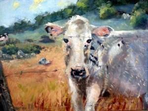 Marin Cow Series 2