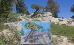 Junipers of Kit Carson Pass
