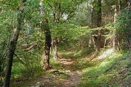 Bosque en equilibrio