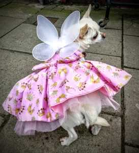 Small dog in pink dress with wings brought to the Faery Ball