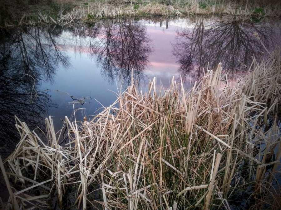 Sunset on the Avalon Marshes near Glastonbury by Vicki Steward
