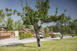Old Oaks Touring Site near Glastonbury