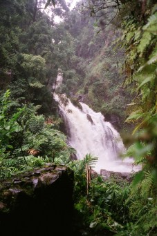 Waterfall during our drive thru Hana Road