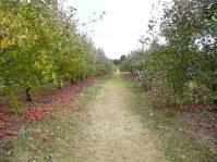 Aamodt's Apple Farm, Stillwater.