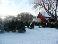 Shopping for Christmas Trees at Axdahl's Farm.