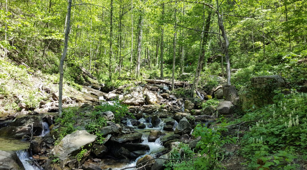 Little Amicalola Creek at the base of the falls