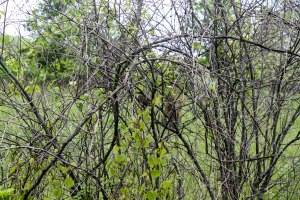 Playing hide and seek with this camouflaged bird