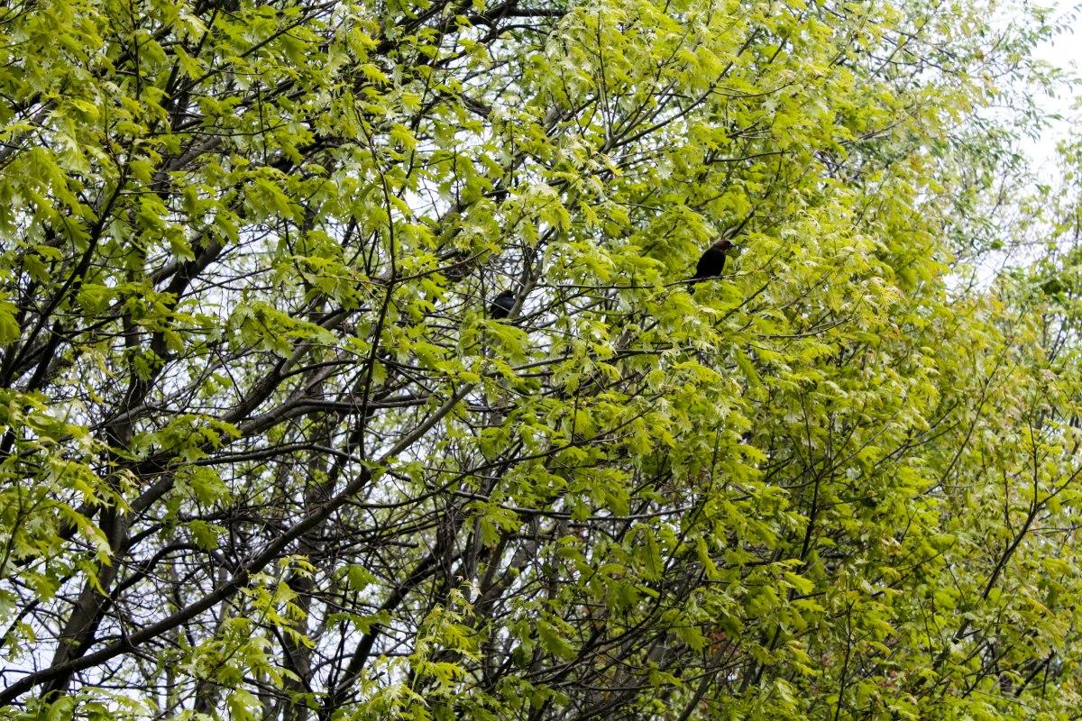 A pair of birds