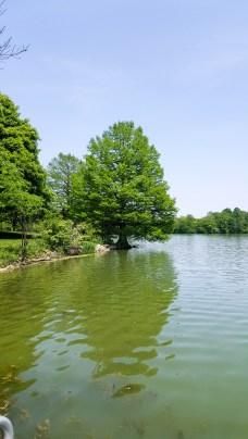 Beautiful symmetrical tree