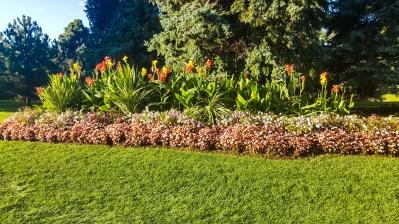 Flowers at Sugar House Park