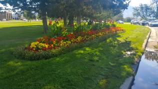 Flowers at Sugar House Park, Salt Lake City, Utah