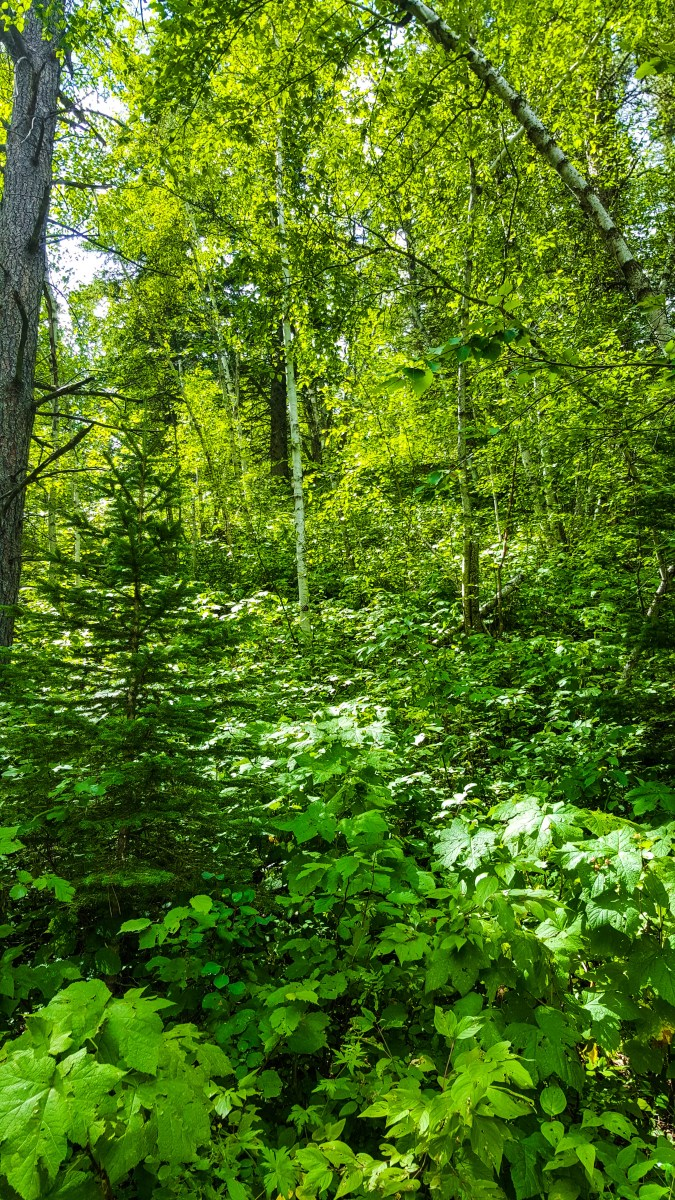 GREEN! Forest in the Black Hills