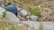 New marmot friend