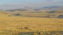 Lamar Valley