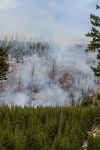 2016 Wildfire in Yellowstone National Park