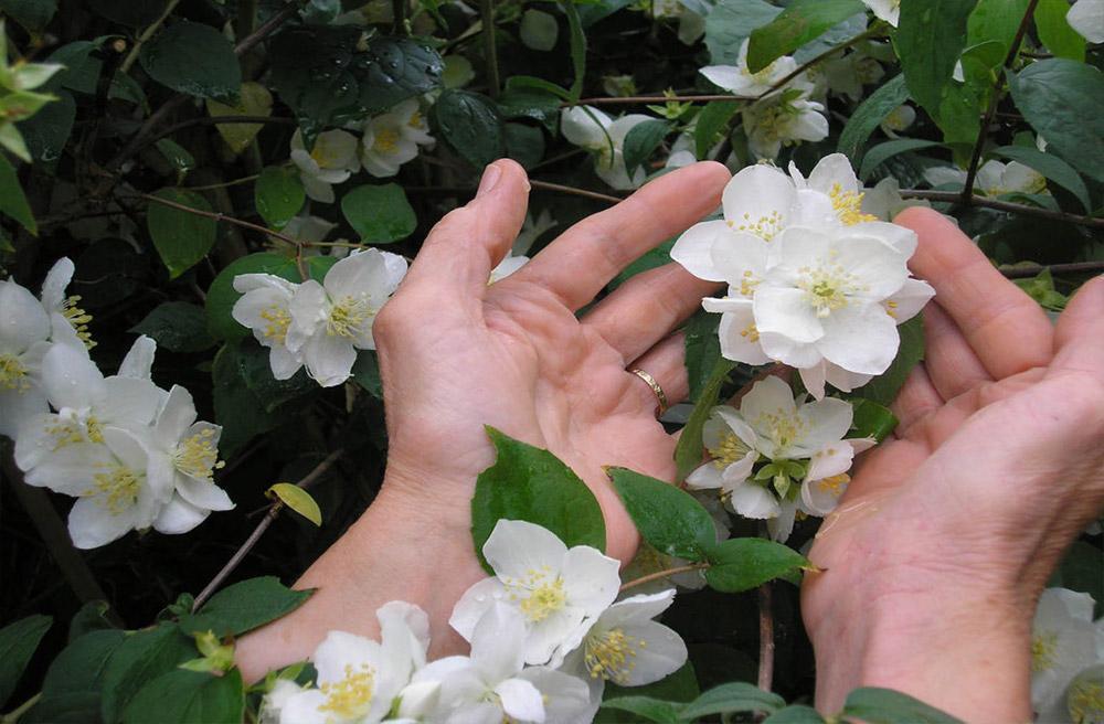 douceur-fleurs-galerie formation
