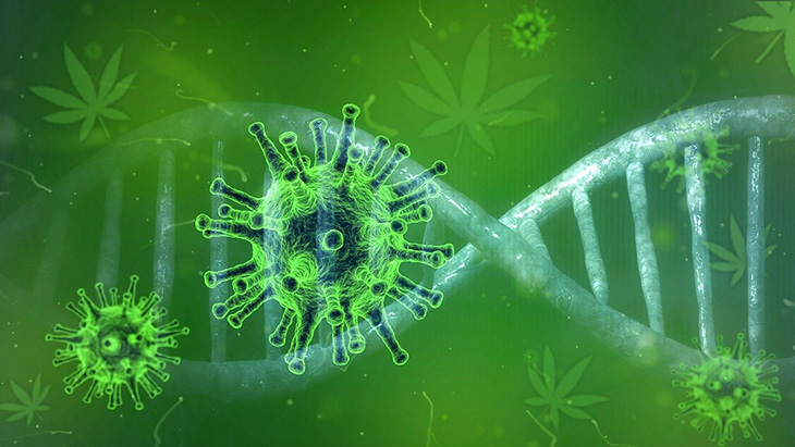 Cannabis and Cells