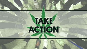 Take Action for Marijuana Law Reform